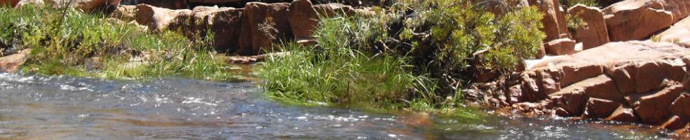 Cedarberg RIver